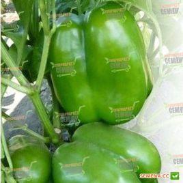КС 04 (KS 04) F1 семена перца сладкого тип Блочный среднего корот.куб. 220-250гр.11-13см 4-х камер. 9-10мм зел./красн. (Kitano S
