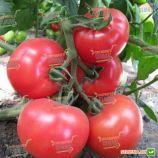 KS 14 F1 семена томата индет. розового (Kitano Seeds)