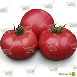KS 38 F1 семена томата индет. розового (Kitano Seeds)