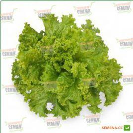 КС 129 (KS 129) семена салата тип Батавия зел. (Kitano Seeds)