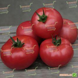 Кибо F1 (KS 222) F1 семена томата индет. раннего 102-106 дн. окр.-прип. 250-350г роз. (Kitano Seeds)