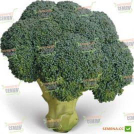 KS 355 F1 семена капусты брокколи (Kitano Seeds)