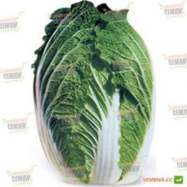 КС 533 (KS 533) F1 семена капусты пекинской ранней (Kitano Seeds) СНЯТО С ПРОИЗВОДСТВА