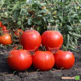 KS 829 F1 семена томата дет. (Kitano Seeds)
