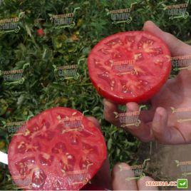 Анита (KS 829) F1 семена томата дет. среднего окр. 250-280г (Kitano Seeds)
