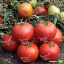 КС 835 (KS 835) F1 семена томата дет. среднепозднего окр. 220-270г (Kitano Seeds)