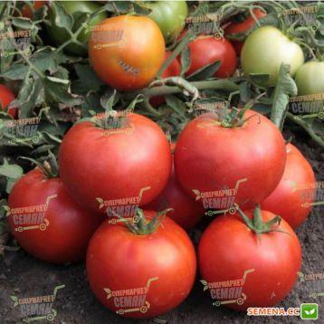 Хайд F1 (KS 835) F1 семена томата дет. среднепозднего 115-125 дн. окр. 220-270г красный (Kitano Seeds)