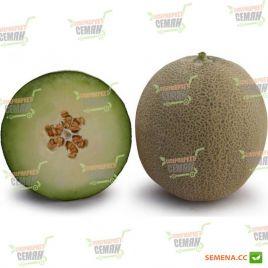 КС 7044 (KS 7044) F1 семена дыни тип Japanese ранней 75-80 дн. 1,5-2,0 кг окр. сер.-зел./св.-зел. (Kitano Seeds)