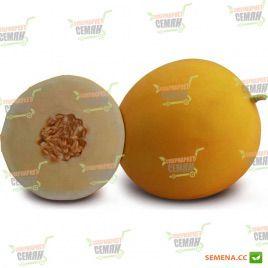 КС 7066 (KS 7066) F1 семена дыни тип Honey Dew 75-80 дн. 1,8-2,5 кг окр. (Kitano Seeds)