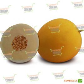 KS 7066 F1 семена дыни тип Honey Dew (Kitano Seeds)