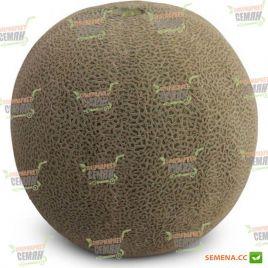 КС 7084 (KS 7084) F1 семена дыни тип Japanese ранней 65-70 дн. 1,5-2,5 кг окр.(Kitano Seeds)