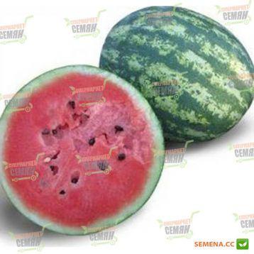 KS 8322 F1 семена арбуза тип Кримсон Свит (Kitano Seeds)