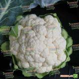 Мисора F1 (KS 22 F1) cемена капусты цветной средней 80-85 дн. 2-3 кг бел. (Kitano Seeds)