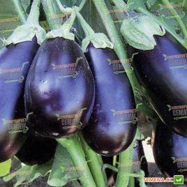 Прадо F1 (КS 27 F1) семена баклажана раннего 180-230 гр. 20-23 см окр.удл. (Kitano Seeds)