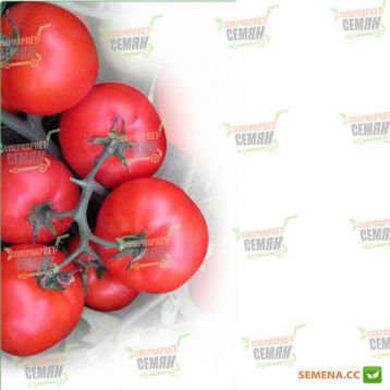 Вирта (KS755) F1 семена томата дет. раннего 95-100 дн. окр. 140-150г (Kitano Seeds) НЕТ СЕМЯН