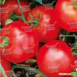 1502 F1 семена томата дет. раннего 200-220 гр. (Lark Seeds)