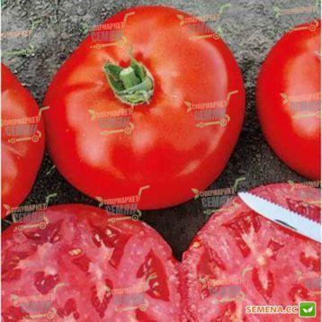 1504 F1 семена томата дет. среднеранн. 220-280 гр. (Lark Seeds)