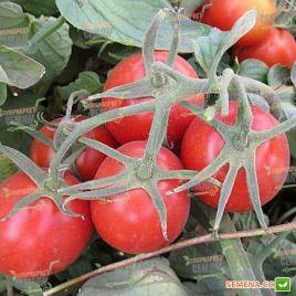 2040 F1 семена томата дет. (Lark Seeds)