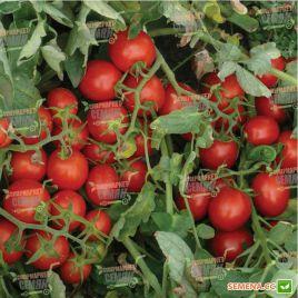 2206 F1 семена томата дет. (Heinz/Lark Seeds)