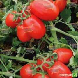 8504 F1 семена томата дет. (Heinz/Lark Seeds)