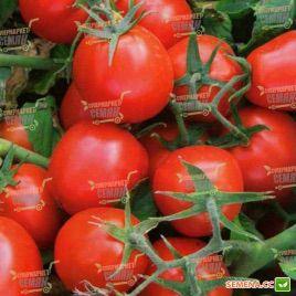 9661 F1 семена томата дет. раннего 100 дн. слив. 90-100 гр. (Heinz/Lark Seeds)