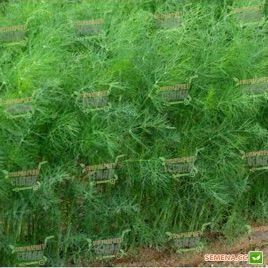 Адмирал семена укропа (Lark Seeds)