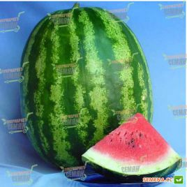 АУ Продюсер семена арбуза тип кр.св. среднего 75-80 дн. 8-12 кг овал. (Lark Seeds)