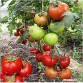 Баракуда F1 семена томата индет. раннего 100 дн. окр.-прип. 160-190г (Lark Seeds)