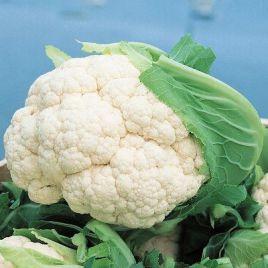 Бодилис F1 семена капусты цветной средней 1,7-3 кг (Vilmorin)