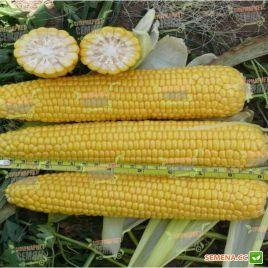 Добрыня F1 семена кукурузы суперсладкой Sh2 ранней 70 дн. 24-25 см 16-18р. (Lark Seeds)