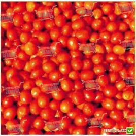 Френзи F1 семена томата дет. черри (Lark Seeds)