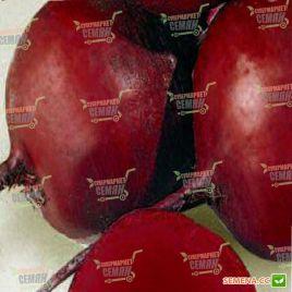 Гарольд семена свеклы столовой среднеранней 65-70 дн окр. (Lark Seeds)