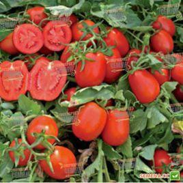Геракл F1 семена томата дет. позднего 125 дн. слив. 100-120г (Lark Seeds) НЕТ ТОВАРА