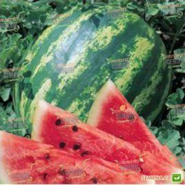 Лентуш F1 семена арбуза тип кр.св. ультрараннего 62-63 дн 6-9 кг окр. (Lark Seeds)