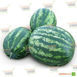 Лонци F1 семена арбуза тип Кримсон Свит ультрараннего 62-65 дн 7-9 кг (Lark Seeds)
