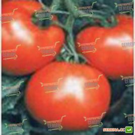 Мобил семена томата дет. позднего 130 дн. окр. 160 гр. (Lark Seeds)