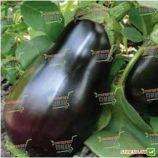 Модар F1 семена баклажана ультраранн 21 см 07 кг (Lark Seed)