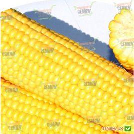 Рання Насолода F1 семена кукурузы суперсладкой Sh2 ультраранней 68 дн. 22-24см 14-16р. (Lark Seeds)