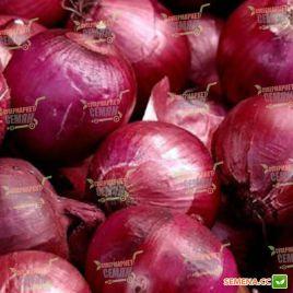 Ред Лаки F1 семена лука репчатого красного среднего 120 дн 150-180 гр (Lark Seeds)
