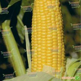 Уокер F1 насіння кукурудзи суперсолодкої ранньої Sh2 73дн. 25см . (Lark Seeds).