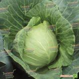 Капитал F1 семена капусты б/к ранней (калибр.) (Lark Seeds)
