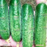 семена огурца стингер f1