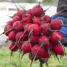 Адель (до 10 стандарт) семена редиса тип Сора 22-25 дн. (Lucky Seed)