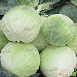 Аркадия F1 семена капусты б/к среднеспелой 85-90дн 3-4кг (Lucky Seed)