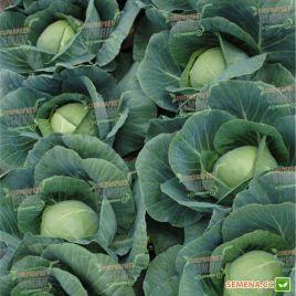 Аванте F1 семена капусты б/к среднеранней 75-80 дн 1,5-2кг (Lucky Seed)