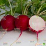 Элиза F1 (от 9 стандарт плюс) семена редиса (Lucky Seed)