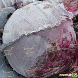 Корнет F1 семена капусты к/к средней 85-90 дн 2-2,5кг (Lucky Seed)