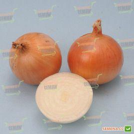 Шеба F1 (LS 0152 F1) семена лука репчатого раннего короткого дня 85-90 дн 120-150гр (Lucky Seed)