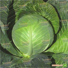 LS 219n F1 семена капусты б/к поздней (Lucky Seed )