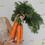 Руфина F1 (LS 0316 F1) семена моркови Нантес ранней (Lucky Seed)